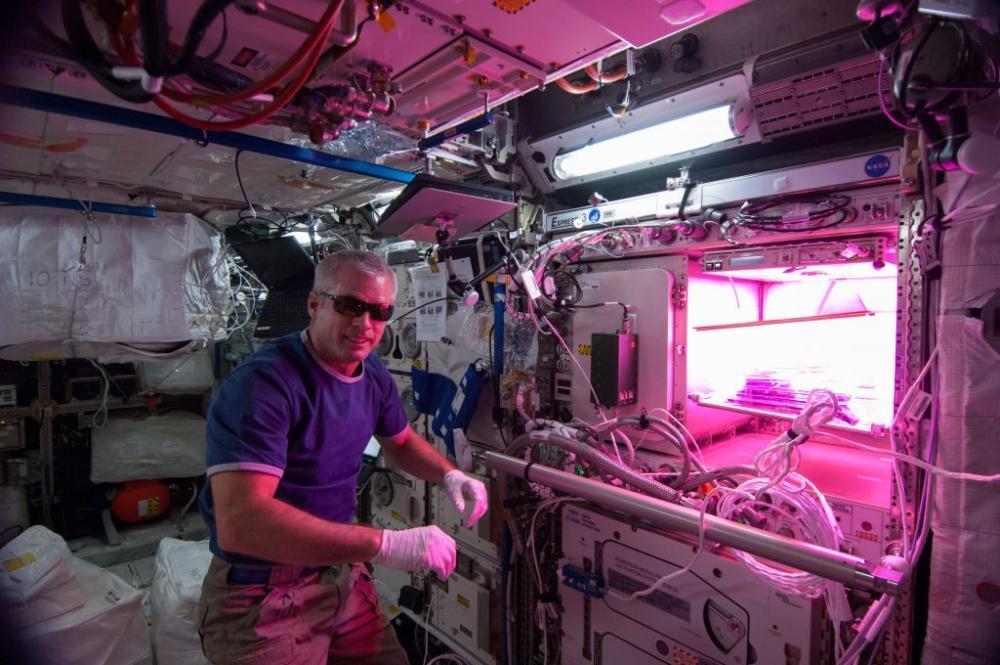 LED Grow Lighting • Plants in Space - Space Garden 08.jpg